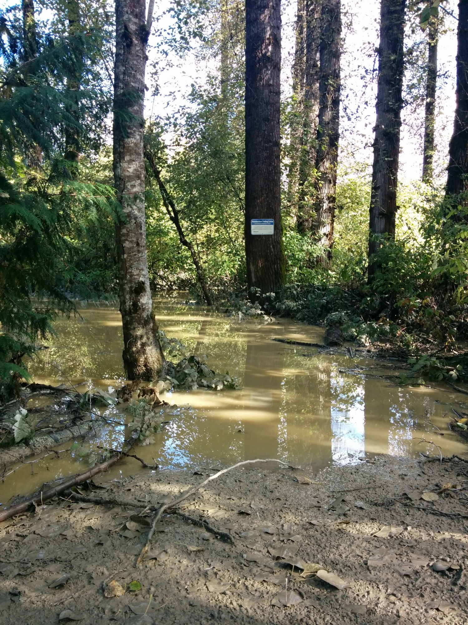 Flooding on Adventure Ranch Section of Pemberton Valley Loop Trail