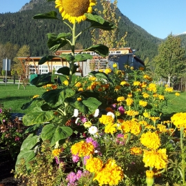 fall flowers at the Pemberton District Community Centre