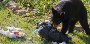 Managing Wildlife Attractants